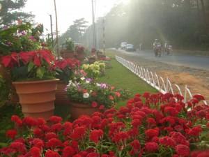 hoa431120009 300x225 Đà Lạt   thành phố ngàn hoa